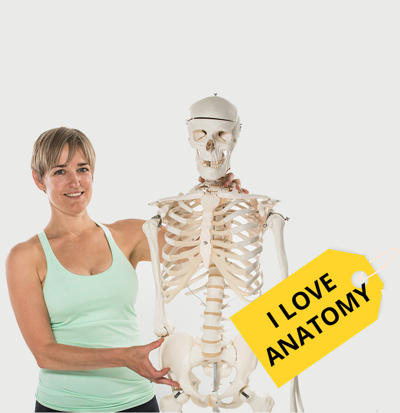 Videos of I Love Anatomy - Functional Synergy