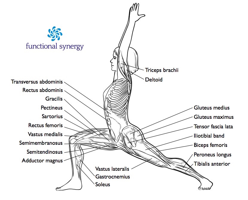 Warrior 1 Labelled Functional Synergy